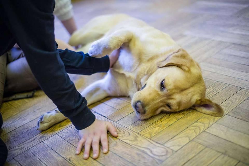 Kutyaterápia – Hogyan hatnak a kutyák az autista, hiperaktív és figyelemzavaros gyerekekre? Hogyan válasszunk kutyát gyerek mellé?
